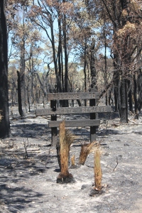 Burnt Sign and forest where life was once found