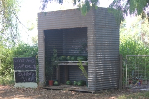 The little shed of water melons